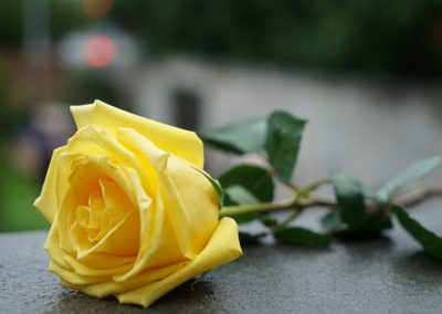 UNOS National Donor Memorial - Yellow rose